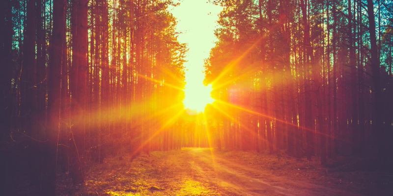 Image of sun set in a wood